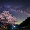 春暁の山桜2016