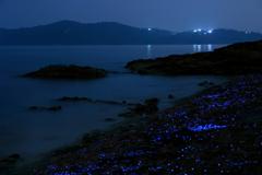 Night beach fantasy