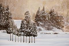 夕暮れ雪景