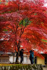 紅葉Photo*4