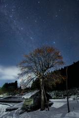 柿の木の夜