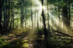 朝の森にて*1