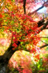色とりどりの紅葉*6
