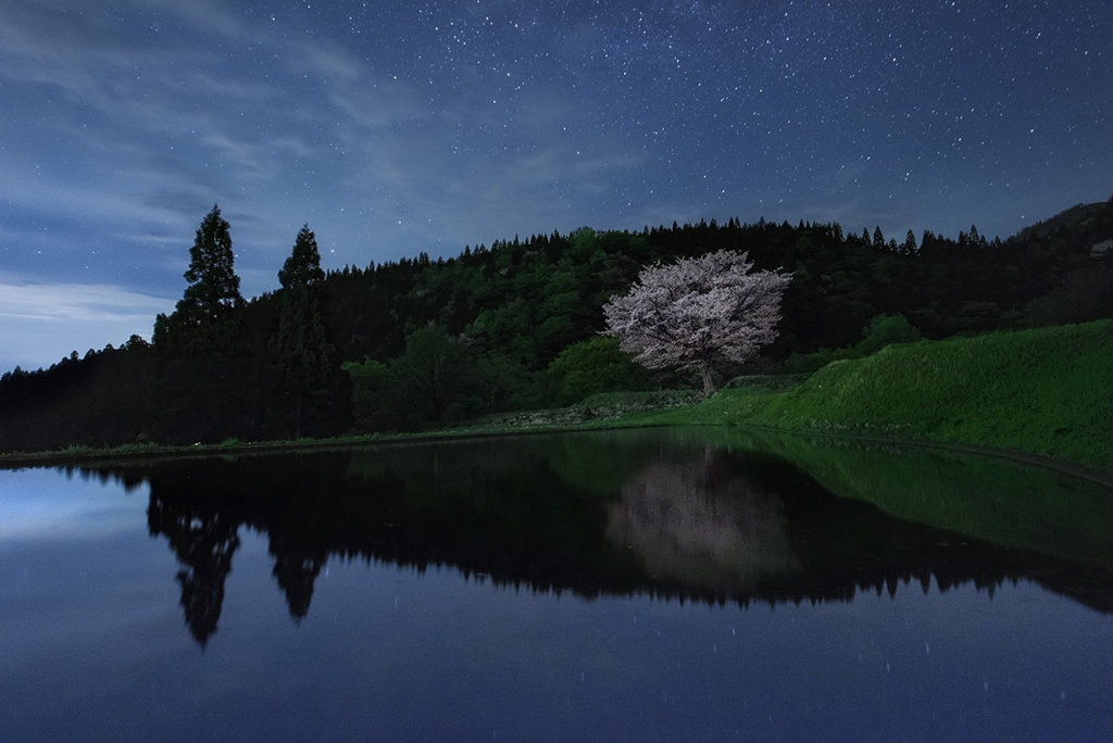 咲かぬとあきらめていた桜が咲いてくれた喜び*3