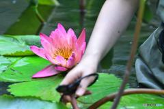 初々しい花と乙女の手