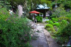 萩が咲く海蔵寺