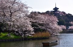 横浜三溪園も満開