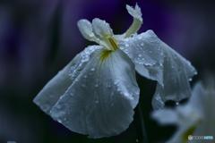 恵みの雨粒