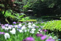 眩しさに日陰で集う菖蒲園