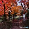 晩秋の散策路