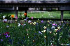 木道の下の花園