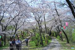 桜のトンネルを登ると