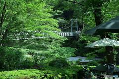 薫風の楓橋