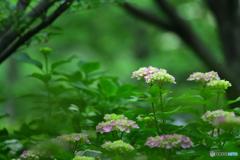 花咲く森の中~~