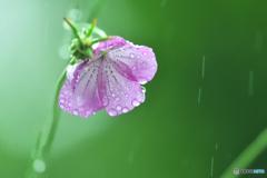雨雨ふれふれ。。