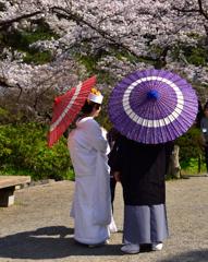 """""""春ですね""""(2)"""
