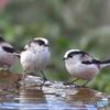 水盤端会議