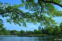 新緑爽やかな日本庭園