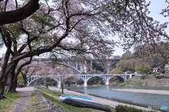 相模川の春