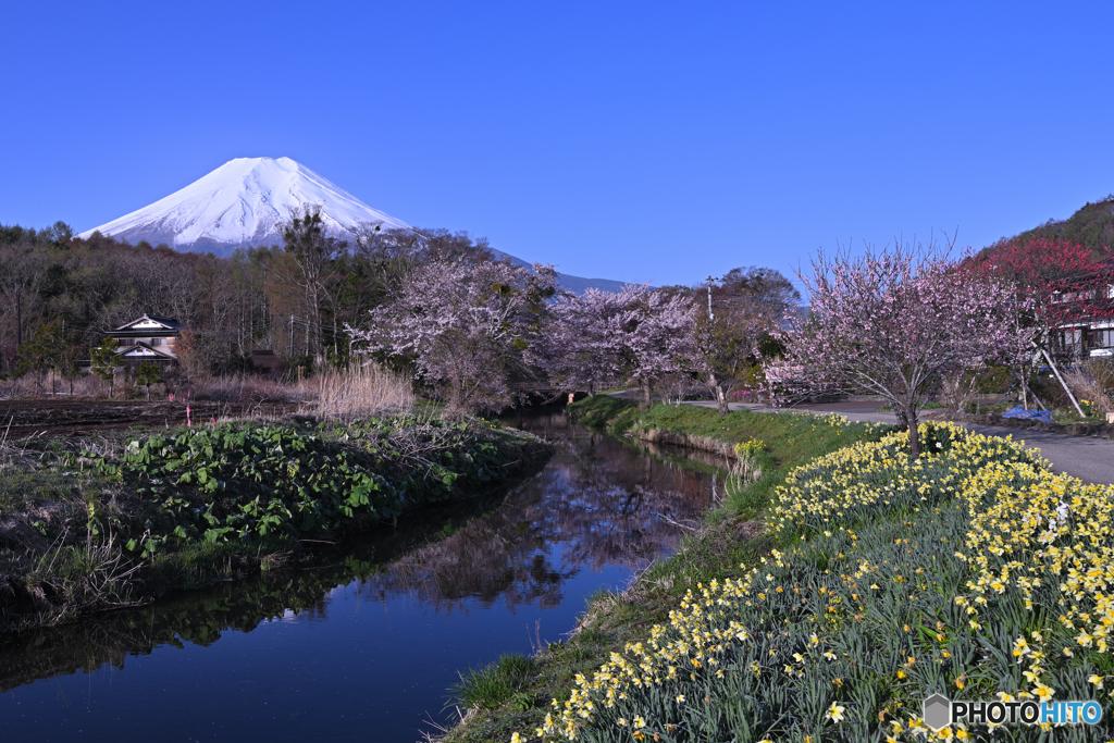 忍野村の長閑な春
