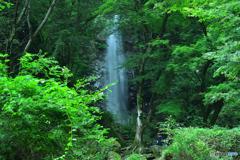緑の森の奥に