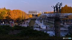 夕照の銀杏並木
