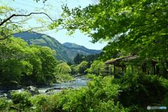 新緑に染まる山河