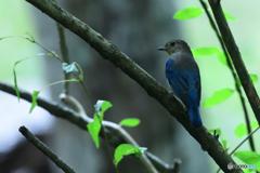 野鳥の森の美少年