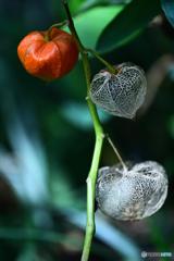 煌めく籠に宿る種子