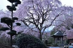 古寺の春Ⅱ