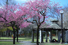 この季節は公園も華