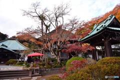 晩秋の海蔵寺