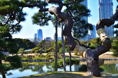 都会の日本庭園
