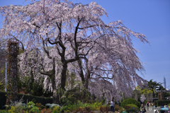 春だぁ~~