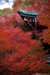秋満開 3