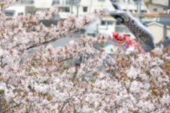 桜の次の季節