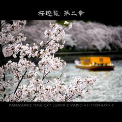 桜遊覧 第二章