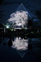 京都東山・花灯路