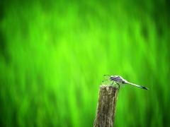 晩夏に羽を休む