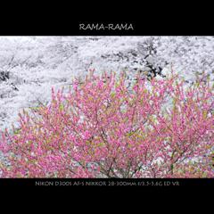 RAMA-RAMA