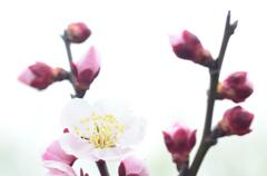 幾度目の春