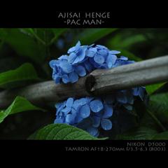 AJISAI  HENGE   -PAC MAN-
