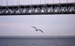 明石海峡大橋より