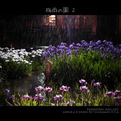 梅雨の園 2