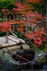 妙智院の秋