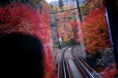 紅葉列車 2
