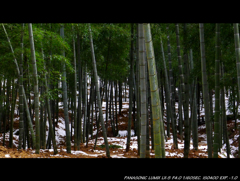 WHITE BAMBOO FOREST