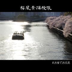 桜風景探検隊 天満橋編