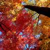今村公園2012秋 #03