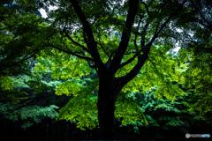 2020 夏 英彦山の森 #1